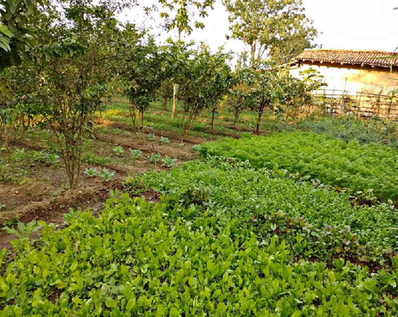 Integrating food and nutrition security