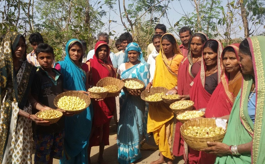 Community initiatives for agrobiodiversity conservation and climate-resilient agriculture